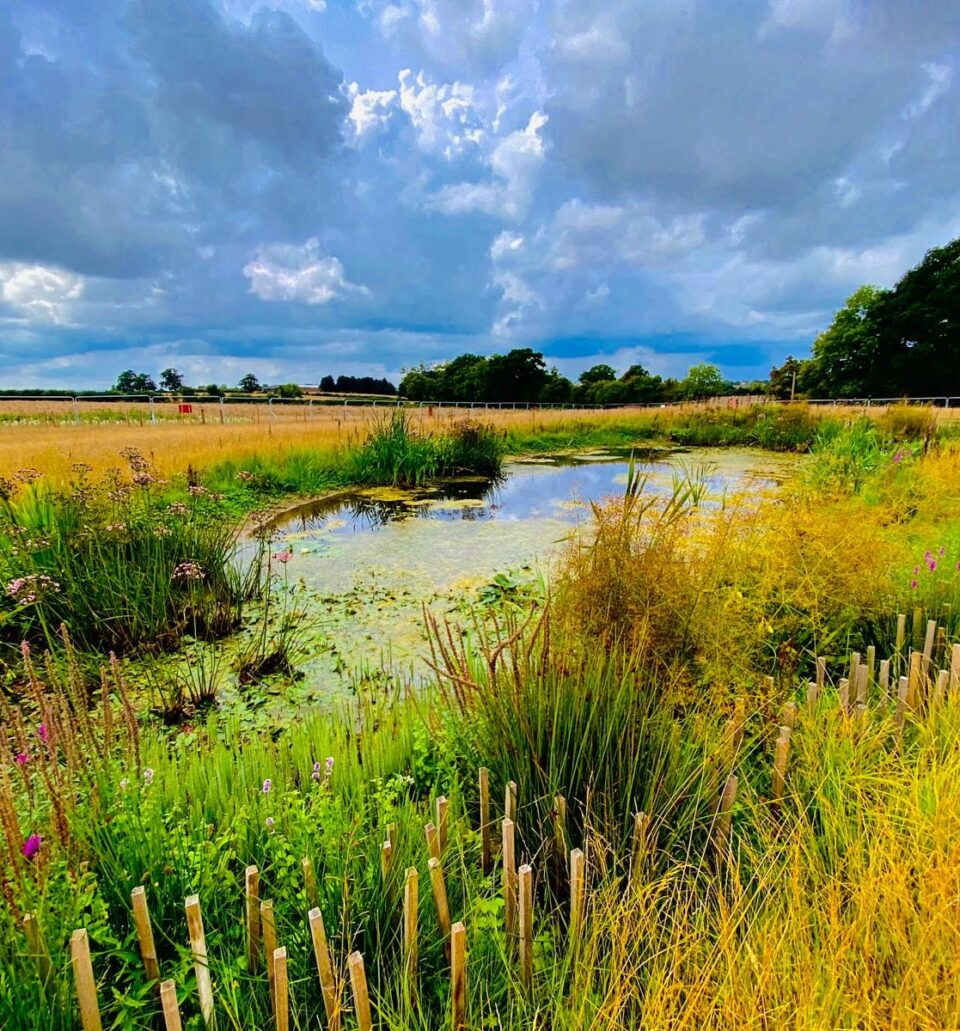Pond creation